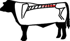 Filet, Tenderloin
