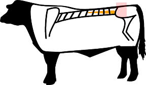Rump Steak, Hüftsteak
